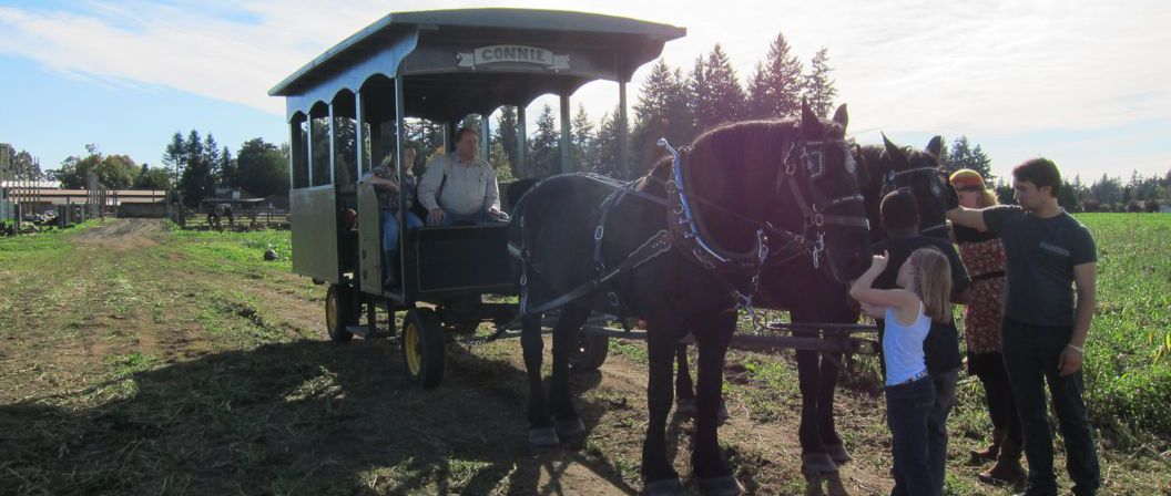 Cramers-Western-Town-Pumpkin-Patch-Horses-Wagon-Ride-e1414032078483